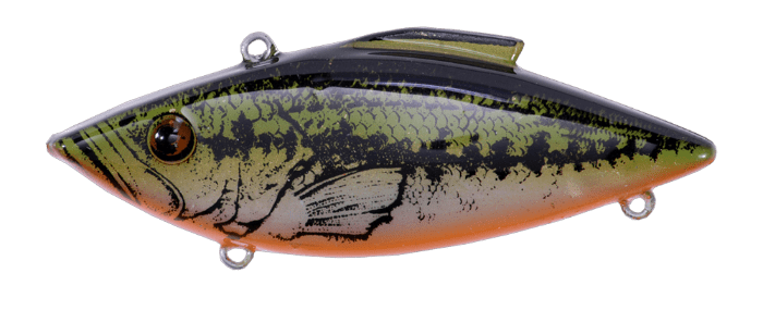 30OB-Yearling-Bass-Orange-Belly